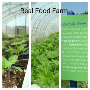 Images from Baltimore's Real Food Farm urban farming plots.